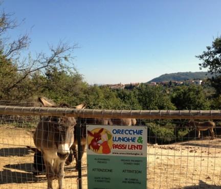 Associazione Orecchie lunghe&passi lenti, promuove attività rivolte alla tutela degli asini