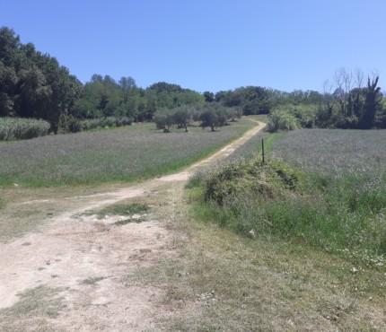 Sentieri sul San Bartolo